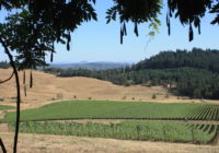 Iris Vineyards – Oregon